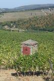 Reihen der Weinberge und der Hügel von Toskana in Italien Lizenzfreie Stockbilder