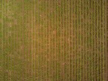 Reihen der Zuckerrübenplantage angesehen vom Brummen stockbild