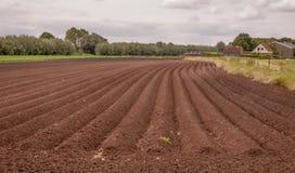 Reihen des Bodens mit vor kurzem gepflanzten Kartoffeln Stockfotografie