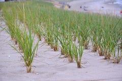 Reihen des Dünen-Grases auf dem Strand Stockfotos