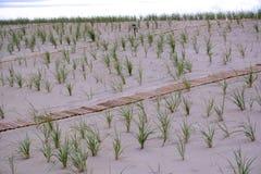 Reihen des Dünen-Grases auf dem Strand Stockfoto