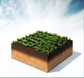 Reihen des Gemüses Lizenzfreie Stockfotos