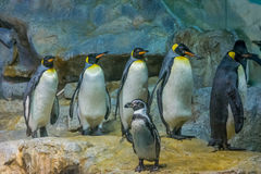 Reihen des Pinguins Lizenzfreie Stockbilder
