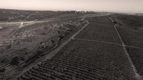 Reihen des Weinbergs bevor dem Ernten Stockfotos