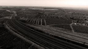 Reihen des Weinbergs bevor dem Ernten Stockbilder