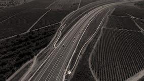 Reihen des Weinbergs bevor dem Ernten Lizenzfreie Stockfotos
