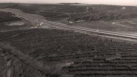 Reihen des Weinbergs bevor dem Ernten, Brummenansicht Stockfotografie