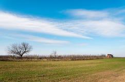 Reihen des Weinbergs mit bloue Himmel im Frühjahr Stockfotos