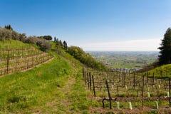 Reihen des Weins Stockbilder