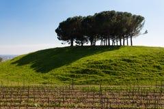 Reihen des Weins Lizenzfreie Stockfotos