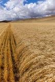 Reihen des Weizens im Palouse Stockbild