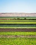 Reihen-Getreide Stockfotos
