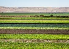 Reihen-Getreide Lizenzfreie Stockfotografie