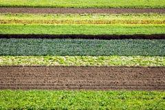 Reihen-Getreide Lizenzfreie Stockfotos