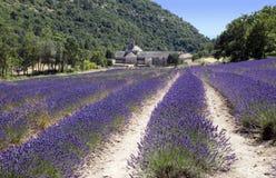 Reihen und Abtei des Lavendels Lizenzfreie Stockfotos