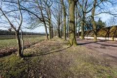 Reihen von bloßen Bäumen neben einem Feld in der Winterzeit Lizenzfreies Stockfoto