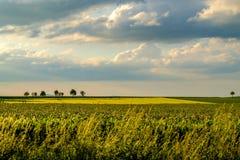 Reihen von jungen Grünpflanzen auf einem fruchtbaren Feld mit dunklem Boden im warmen Sonnenschein unter drastischem Himmel Lizenzfreie Stockfotos
