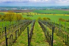 Reihen von Weinbergen im Sommer, Süd-Moravian-Region, Tscheche Republ stockfotografie