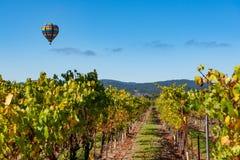 Reihen von Weinreben mit Heißluftballon lizenzfreie stockfotografie