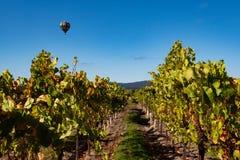 Reihen von Weinreben mit Heißluftballon stockfoto