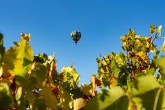 Reihen von Weinreben mit Heißluftballon lizenzfreie stockfotos