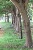Reihenbäume Stockfotografie