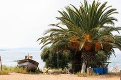 Reihenboot nahe einer grünen Palme auf einer Küste Stockfotos