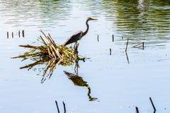 Reiher auf dem Fluss Die Reflexion des Reihers im water_ stockfoto