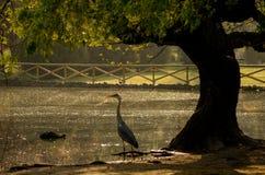 Reiher, der auf dem Ufer stillsteht lizenzfreie stockfotografie
