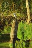 Reiher, der auf einem hohen Stumpf steht Lizenzfreies Stockfoto