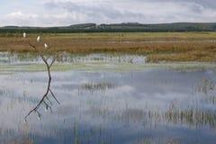 Reiher in einem Baum auf einem See in Südafrika Stockbild