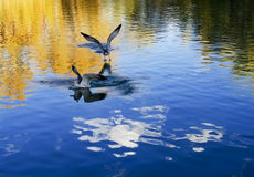 Reiher fliegen frei um das Potala-Palast Lizenzfreies Stockfoto