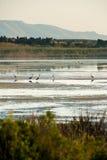 Reiher im Naturreservat von Vendicari in Sizilien Lizenzfreie Stockbilder