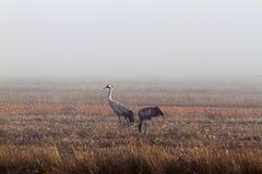 Reiher im Nebel lizenzfreies stockbild