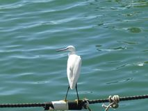 Reiher im Seehafen auf dem Seil lizenzfreies stockfoto