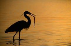 Reiher mit Niederlassung im Meer bei Sonnenuntergang Stockfotografie