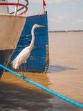 Reiher mit Schiff im Hafen Stockfotografie