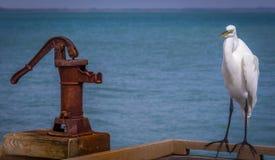 Reiher am Strand Lizenzfreie Stockfotografie