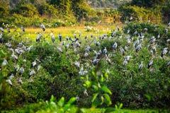 Reiher-Vogelbeobachtung lizenzfreie stockfotos