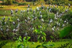Reiher-Vogelbeobachtung lizenzfreies stockbild