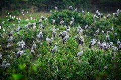 Reiher-Vogelbeobachtung stockbild