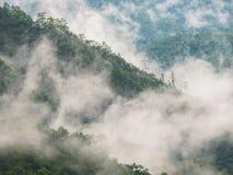 Rein von nebeligem im Wald an der Spitze des Berges in der Regenzeit stockfoto