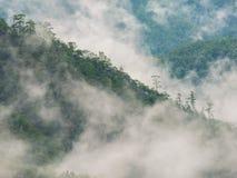 Rein von nebeligem im Wald an der Spitze des Berges in der Regenzeit lizenzfreie stockbilder