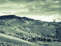 Rein von nebeligem im Wald an der Spitze des Berges in der Regenzeit stockfotos