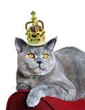 Reina de gatos imagen de archivo libre de regalías