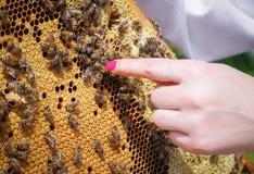 Reina de la abeja en colmena Fotografía de archivo libre de regalías