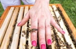 Reina de la abeja a mano Foto de archivo