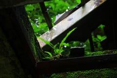 Reina de las plantas frondosas Fotos de archivo libres de regalías
