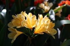 Reina del reino de la flora Fotos de archivo libres de regalías