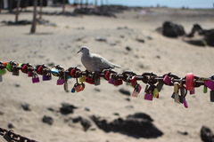 Reincarnation or merely a dove resting. Memory locks with a dove sitting on a memory chain to celebrate a newfound relationship or to cease depression over a royalty free stock image